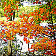 Amber Leaves  Poster by Dianne  Lacourciere