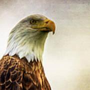 American Bald Eagle With Flag Poster by Natasha Bishop