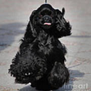 American Cocker Spaniel In Action Poster by Camilla Brattemark