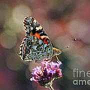 American Painted Lady Butterfly 2014 Poster
