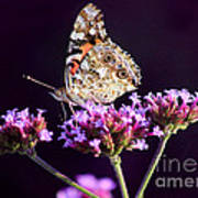 American Painted Lady Butterfly Purple Background Poster
