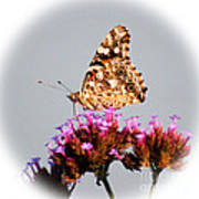American Painted Lady Butterfly White Square Poster