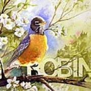 American Robin And Wild Plum Poster