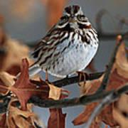 American Tree Sparrow No 2 Poster