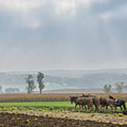 Amish Boy Plowing Poster