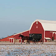 Amish Buggy And Red Barn Poster