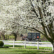 Amish Buggy Fowering Tree Poster