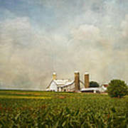 Amish Farmland Poster