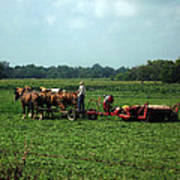 Amish Field Work Poster