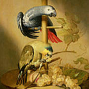 An African Grey And An Orange Winged Amazon Parrot On  A Perch With Grapes Poster
