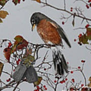 An American Robin Remembers Poster