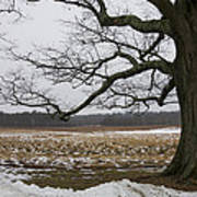 An Appleton Tree And Field In Winter Poster