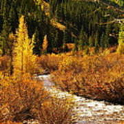 An Autum Stream In Colorado Poster
