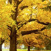 An Autumn Walk - 2 Poster