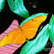 An Orange Butterfly Poster