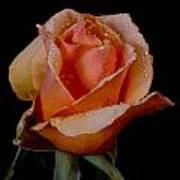 An Orange Rose Poster