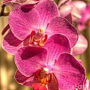 An Orchid Poster