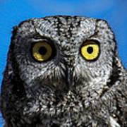 An Owl Poster