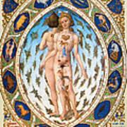 Anatomical Man Poster