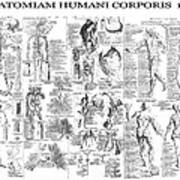 Anatomy Of The Human Body  1728 Poster