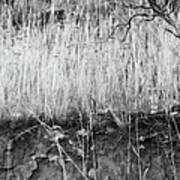 Ancient Sagebrush 2 Poster