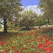 Andalucian Poppies Poster