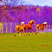 Andy's Horses Poster by BandC  Photography