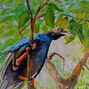 Angel Bird Of  North Moluccas Poster