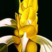 Angel Flower Poster