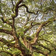Angel Oak Tree Johns Island Sc Poster