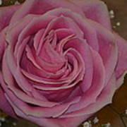 Angel's Pink Rose Poster