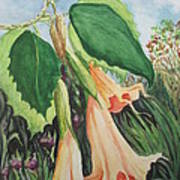 Angel's Trumpet Exotica Poster