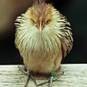 Angry Bird Poster