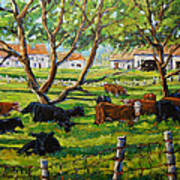 Angus Cows Under The Cool Shade By Prankearts Poster