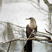 Anhinga On A Misty Morning Poster