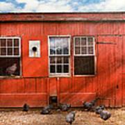 Animal - Bird - Bird Watching Poster