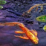 Animal - Fish - There's Something About Koi  Poster by Mike Savad