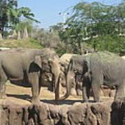 Animal Park - Busch Gardens Tampa - 01131 Poster