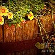 Antique Bucket With Yellow Flowers Poster