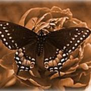 Antique Butterfly Poster by Diane Reed