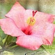 Antique Hibiscus Poster
