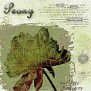 Antique Peony Poster