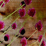 Antique Style Pink Floral Poster