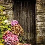 Antique Wooden Door And Hortensia Poster