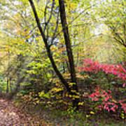 Appalachian Mountain Trail Poster