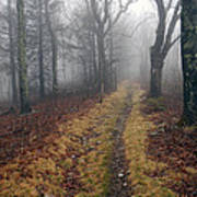 Appalachian Trail Fog Poster