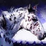 Appaloosa Pony Poster by Roger D Hale