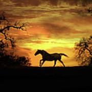 Appaloosa Sunset Poster