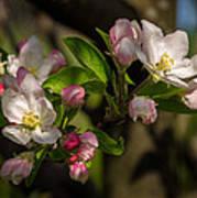 Apple Blossom 3 Poster
