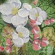Apple Blossom Collage Poster